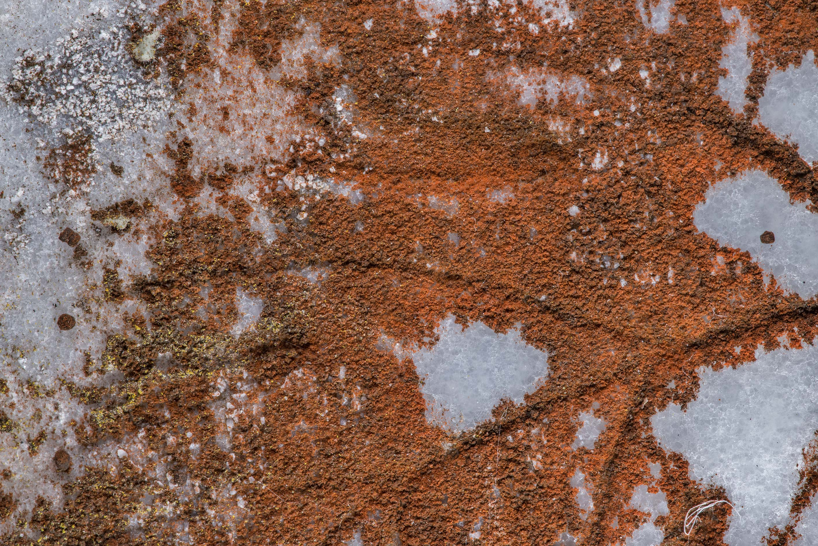 Some rusty red powdery lichen on marble surface...Cemetery near Huntsville, Texas