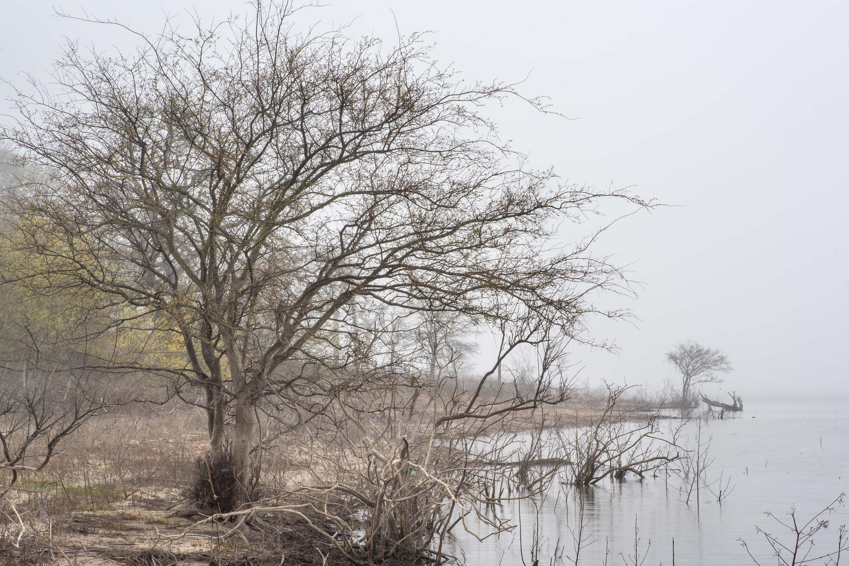 Trees near the lake at Lake Somerville Trailway...of Somerville Lake State Park. Texas