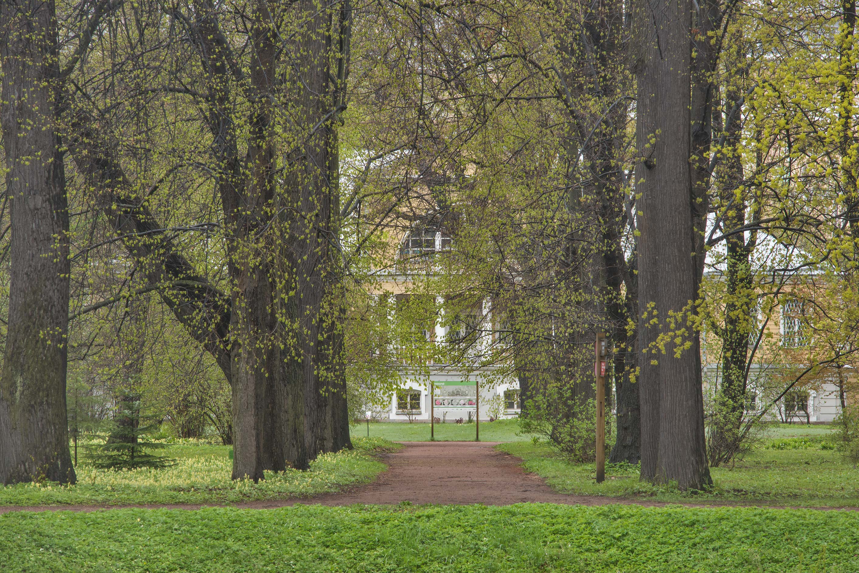 Tree alley in Peter the Great Botanical Garden of...Institute. St.Petersburg, Russia