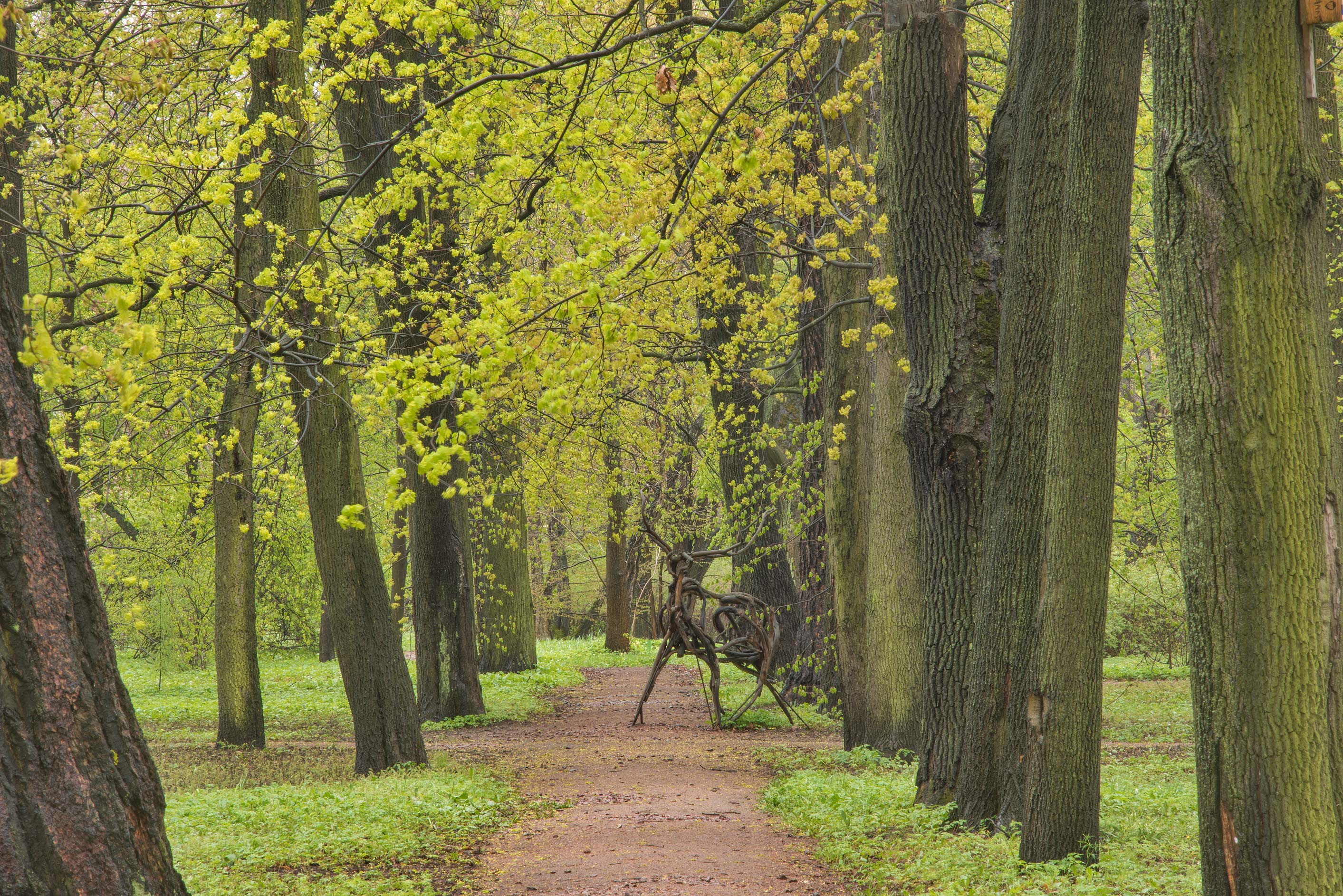 Maple alley with a deer sculpture in Peter the...Institute. St.Petersburg, Russia