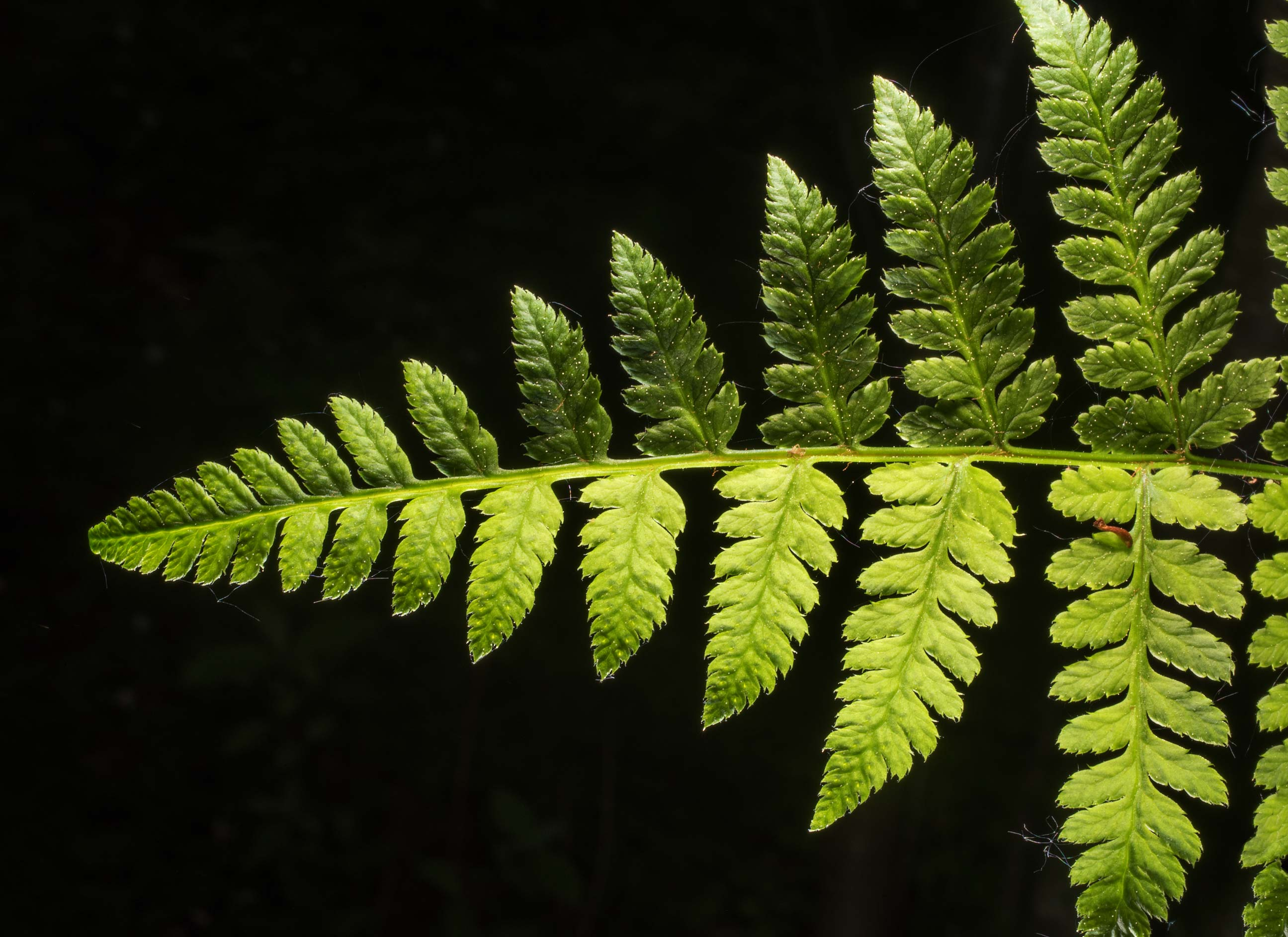 Fern leaf in Dubki Park in Sestroretsk, west from St.Petersburg. Russia