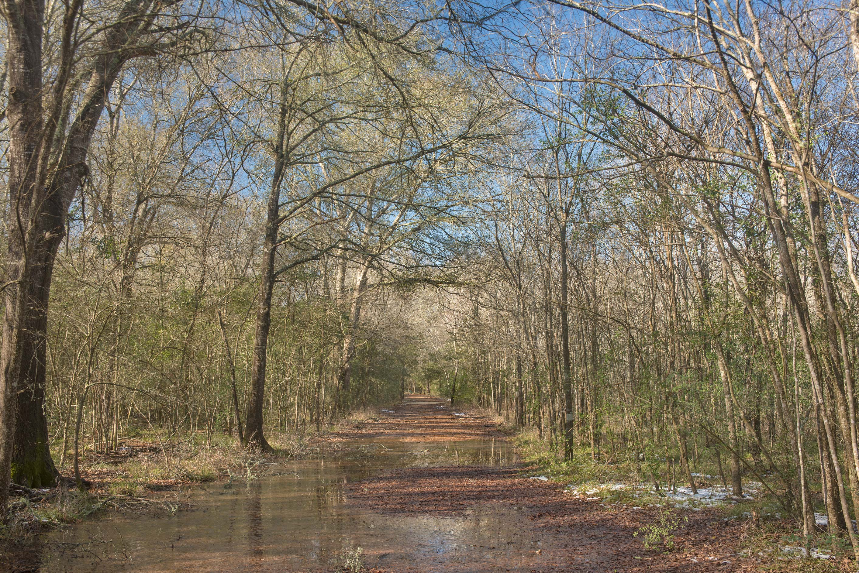 Sandy path with melting snow in Lick Creek Park. College Station, Texas